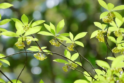 新緑 グリーン 緑 葉っぱ 葉 花 春 みどり 植物 樹木 木 背景 壁紙 美しい 綺麗 きれい 庭 和風 和 日本 公園 森林 マクロ クローズアップ アップ 自然 5月 五月 初夏