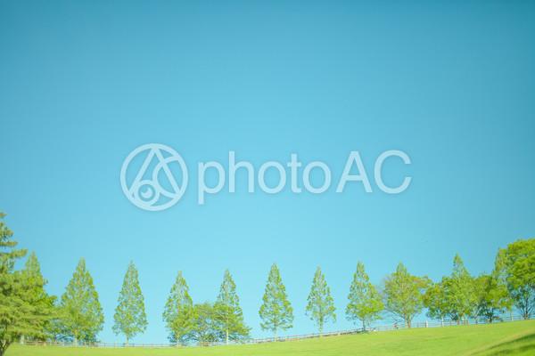 青空と木々5の写真