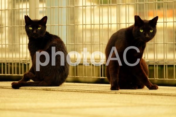 海辺にいた双子の黒猫の写真
