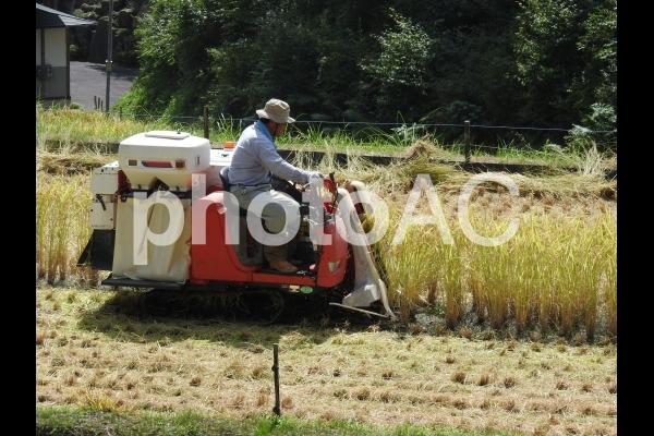 稲刈り 男性 コンバイン03の写真