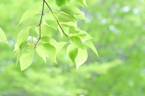 木漏れ日 若葉 風景 青葉 樹木 木 庭 5月 6月 清々しい 森林浴 涼しい 涼しげ 涼感 清涼感 エコ エコロジー 環境 素材 葉 さわやか 可愛い かわいい みどり 植物 風 そよ風 新緑 葉っぱ 爽やか グリーン いやし リラックス リラクゼーション マイナスイオン 健康 美容 背景素材 テクスチャ テクスチャー バックグラウンド 5月 6月 7月 夏 緑 春 初夏 癒し ソフト 公園 医療 イメージ 明るい 光 キラキラ 自然 背景 壁紙 コピースペース テキストスペース