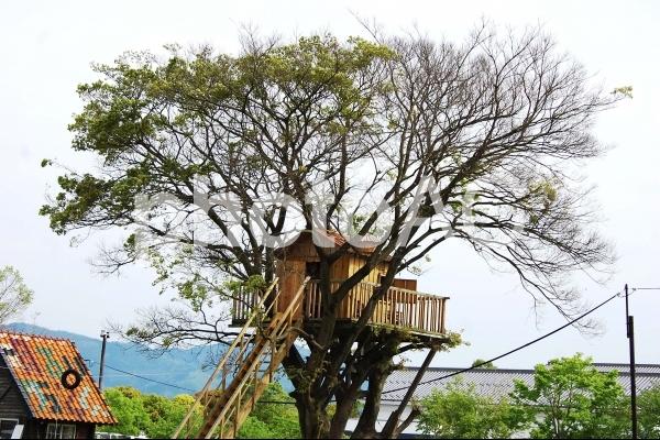 秘密基地気分 ツリーハウス Treehouseの写真