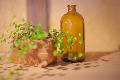 自然 植物 葉 葉っぱ 緑 観葉植物 観賞 植木鉢 プランター 入れ物 ビン ガラス 茶色 透明 反射 映る 壁 光 陽射し 影 建築 建築物 建物 無人 景観 雑貨 置物 空
