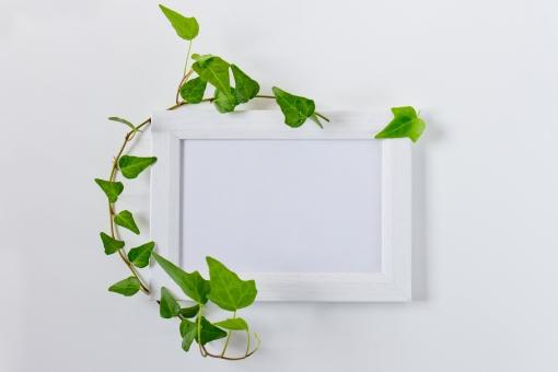 蔦 つた ツタ 緑 グリーン 植物 自然 ナチュラル 観葉植物 葉っぱ 木 フレーム 枠 木枠 小物 インテリア 背景 タイトルバック 爽やか 癒し テキストスペース キイロイトリ パス 白いフレーム フォトフレーム 額縁 白 ホワイト 看板 飾り枠 オブジェクト