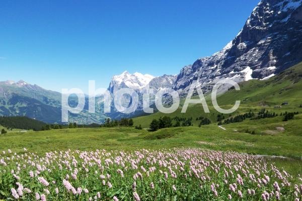 スイスの高原の写真