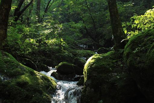 植物 植木 樹 木 樹木 緑 自然 屋外 風景 景色 沢山 群生 葉っぱ 葉 茂る 生い茂る 生える 森 林 自生 水 落ちる 流れる 水面 マイナスイオン 川 河 湧き水 苔 山奥