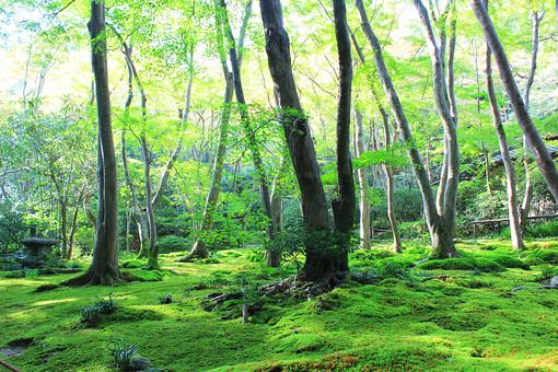 京都 祇王寺 嵐山 緑 嵯峨 秋 苔 庭
