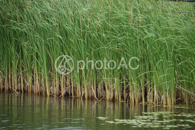水草の写真