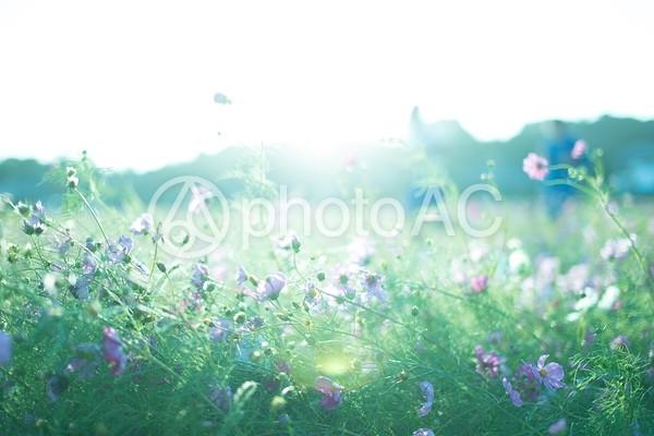 日差しにさらされた花1の写真