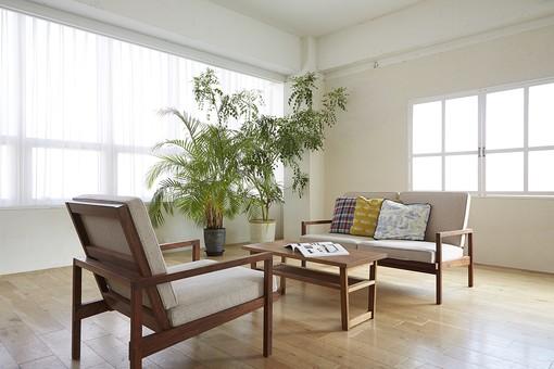 窓 カーテン 緑 観葉植物 グリーン ソファ 椅子 テーブル クッション フローリング 板張り 床 白壁 壁 明るい おしゃれ インテリア デザイン 小物 雑貨 内装 家具 インテリア装飾 室内装飾 部屋 リビング 屋内 室内