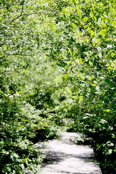 遊歩道 道 山道 空 外 屋外 景色 風景 森 林 山 樹木 自然 樹 木 植物 葉 緑 晴れ 晴天 枝 光り 日差し 青空 山奥