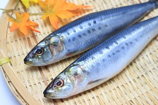 イワシ 鰯 和食 食材 魚介類 食べ物 いわし 魚 生イワシ 生 生鰯 青魚 ザル 笊 モミジ マイワシ 真イワシ 真鰯 生魚 新鮮 鮮魚 素材 真いわし 光沢 まいわし フレッシュ 2尾