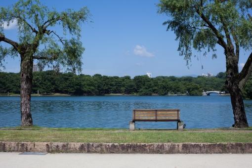 水 海 池 湖 青 透明 空 透明 きれい ベンチ 木 緑 夏 summer green tree bench water sea pond lake blue clear 背景 landscape background