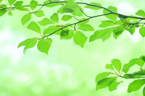 六月 林 心理 心理療法 心理学 心療内科 病院 クリニック 木立 五月 ポストカード 透過光 黄緑 バックグランド 暑中見舞い ミントグリーン 新緑 葉 木漏れ日 若葉 青葉 素材 コピースペース テキストスペース 爽やか さわやか イメージ 庭 清々しい 公園 涼しい 涼しげ 涼感 清涼感 ソフト 葉っぱ 木の葉 風景 木 樹木 森 植物 グリーン エコ エコロジー 環境 eco 森林 森林浴 いやし リラックス リラクゼーション 安らぎ マイナスイオン 健康 美容 背景素材 テクスチャ テクスチャー 夏 緑 春 初夏 癒し きらめき そよ風 バックイメージ バック フレーム 枠 6月 7月 8月 5月 4月 4月 5月 6月 7月 8月 医療 背景 壁紙 自然 明るい 光 キラキラ