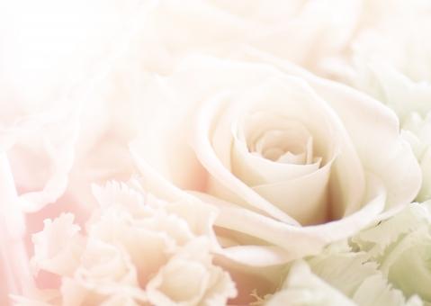 薔薇 ばら バラ 淡い 背景 テクスチャ 花 春 きれい 美しい 植物 バックグラウンド メッセージカード メッセージ ギフトカード コピースペース 誕生日 誕生日カード ポストカード 飾り 装飾 デコレーション 可憐 エステ 美容 ブライダル 結婚 結婚式 ウェルカムボード 招待状