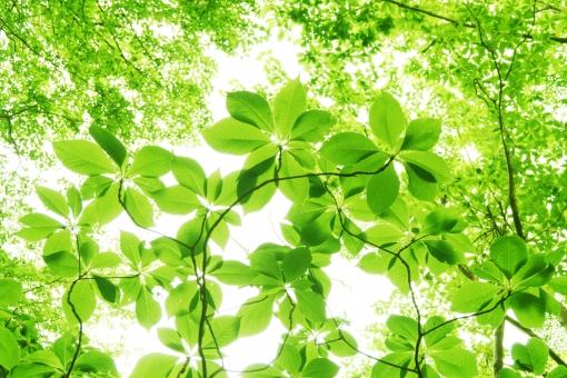 自然 夏 初夏 木洩れ日 木漏れ日 こもれ日 こもれび 緑 グリーン 山 登山 木 樹木 黄緑 光 爽やか 爽快 癒し 葉 輝き 5月 クリーン 空気 クリーンイメージ 透過光 待ち受け ポストカード コピースペース 清潔感 澄んだ空気 若葉 眩しい バックグランド 植物 太陽 日 新緑 明るい 林 葉っぱ 木の葉 木葉 はっぱ 木の枝 小枝 風景 森 エコ エコロジー 環境 eco eco 森林 森林浴 森林セラピー いやし リラックス リラクゼーション やすらぎ 安らぎ マイナスイオン 健康 背景 背景素材 テクスチャ テクスチャー バックグラウンド 3月 4月 5月 6月 7月 8月 春 きらめき キラメキ 優しさ やさしい ソフト