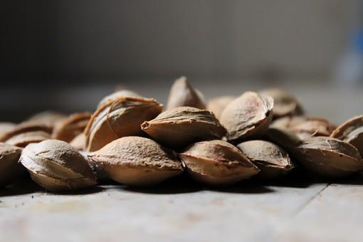 種 たね タネ 食材 ナッツ 食べ物 クローズアップ アップ 生 材料 たくさん 木の実 ホール 粒 美容 健康 健康食品 食事 食材 植物 栽培 園芸 ガーデニング 乾燥 ドライ