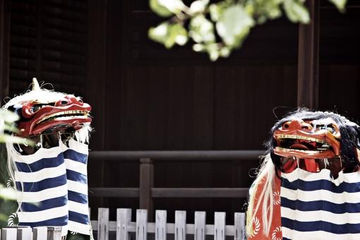 獅子舞 ししまい 伝統芸能 祭囃子 獅子 しし 踊り 舞獅 獅子頭 文化 伝統 新年 お祝い 日本 アジア お面 お寺 神社 仏閣 祈祷 祈願 祭り 操作 顔 生き物