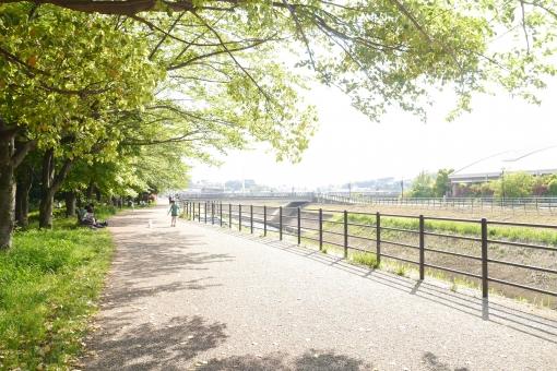 陽光そそぐ散歩道の写真