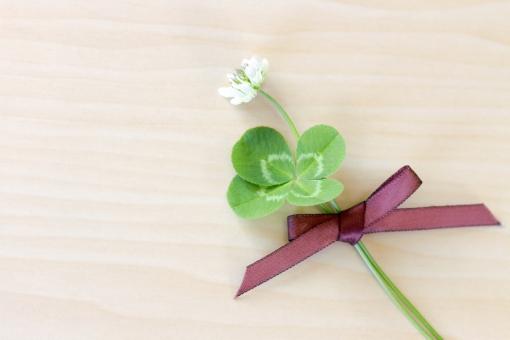 クローバー 植物 草 四葉のクローバー 四葉 幸運 グリーン 花束 シロツメクサ シロツメグサ 草花 四ツ葉 四つ葉 ラッキーアイテム お守り