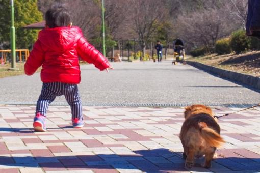 子供 男の子 犬 ワンちゃん ペット 公園 散歩 好奇心 鬼ごっこ 追いかけっこ わんぱく やんちゃ 元気 歩く 歩行 歩道 遊歩道 晴れ トコトコ テケテケ ダウン 子育て 育児 遊ぶ 明るい 楽しい 小さい atohs 1歳 腕を振る 一生懸命