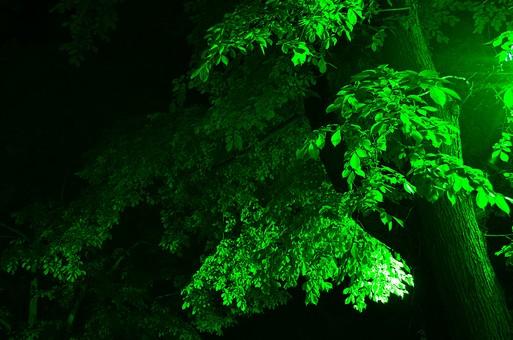 緑 みどり ミドリ グリーン 屋外 外 自然 植物 樹 木 枝 幹 大木 葉 葉っぱ 景色 風景 黒バック 黒背景 無人 光り 照明 暗い 夜 夜景