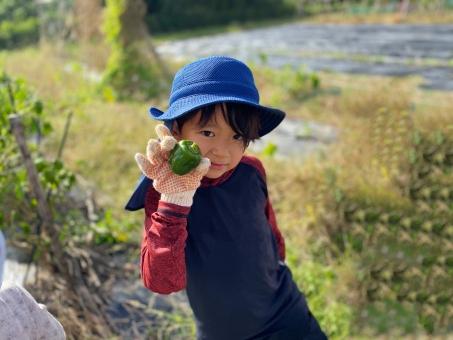 ピーマンを収穫した男の子_01の写真