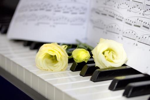トルコギキョウ トルコキキョウ ユーストマ リシアンサス リンドウ科 花 花束 植物 アップ クローズアップ 切り花 鍵盤 ピアノ 楽器 音楽 インテリア グリーン 楽譜 イメージ 癒し リラックス ミュージック