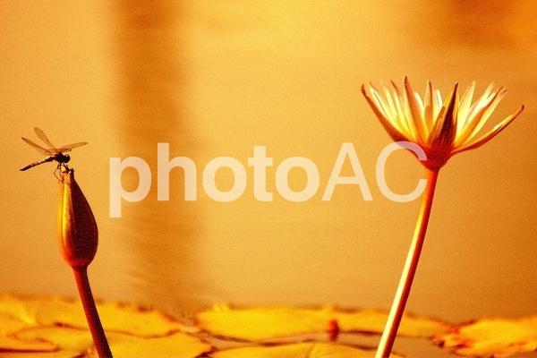 秋のイメージ4の写真