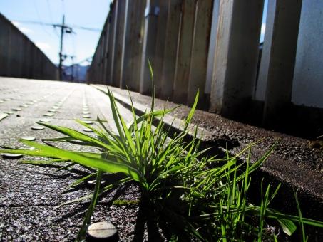 草 路上 自然 風景 植物