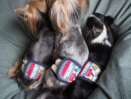 ペット 犬 男の子 マナーベルト おしめ 多頭飼い 兄弟