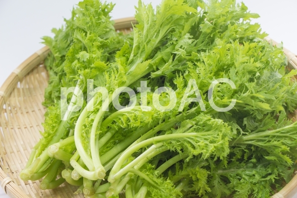 わさび菜の写真