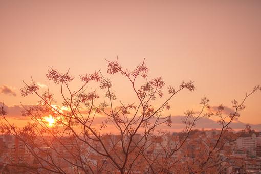 自然 植物 木 樹木 成長 育つ 伸びる 葉 葉っぱ 枝 幹 高い 空 雲 夕日 夕焼け 夕陽 グラデーション 太陽 太陽光 光 陽射し 眩しい オレンジ色 橙色 建物 建築 建築物 ビル 街並み 生活 無人 景観