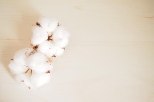 綿の写真素材|写真素材なら「写真AC」無料(フリー)ダウンロードOK