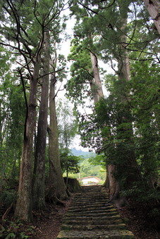 日本 自然 植物 風景 景色 景観 石段 階段 石 石造 草 雑草 土 地面 道 山道 通路 散策 散歩 木 樹木 林 森 森林 葉 葉っぱ 緑 幹 枝 育つ 成長 生える 伸びる 間 空 薄日