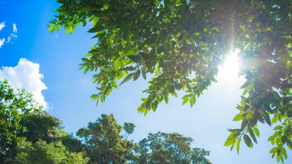 木漏れ日 青空 空 雲 クリーン フレッシュ エコロジー 木 リーフ 葉 太陽 緑 グリーン 壁紙 背景 植物 光 明るい ライト