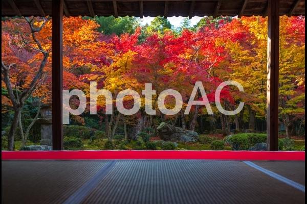 錦秋・京都絵巻!圓光寺の紅葉の写真