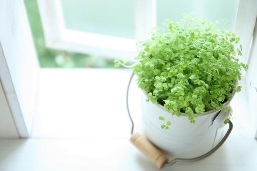 グリーン 観葉植物 葉っぱ 葉 自然 植物 癒し リラックス 窓 光 休憩 まったり 新緑
