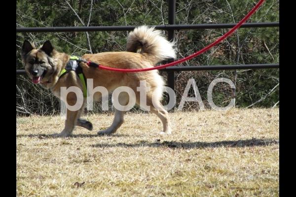 歩く犬の写真