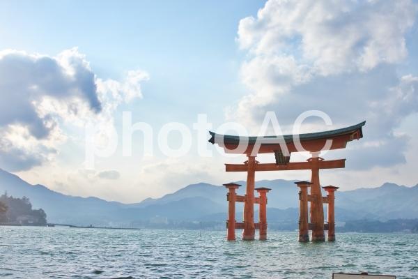 厳島神社の大鳥居の写真