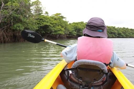 マングローブ林までカヤックを漕ぐの写真