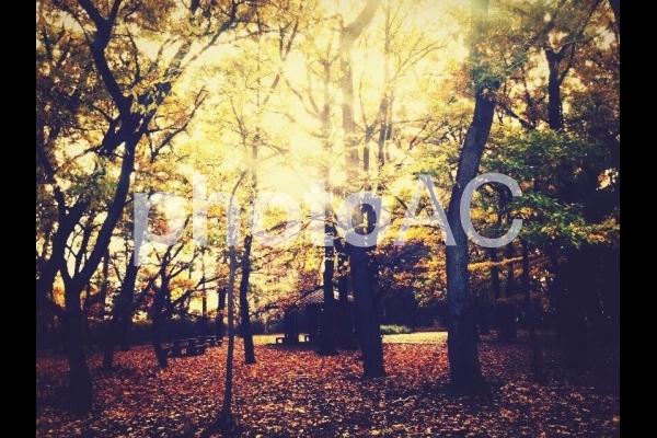 秋の木陰の写真