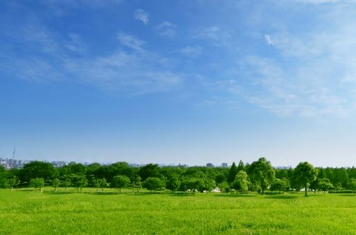 草原の公園と青空と雲の写真
