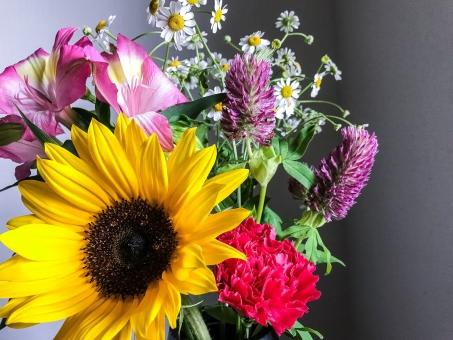 初夏の花々の写真