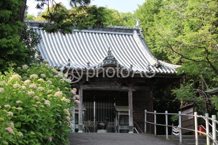 四国八十八ヶ所8番_熊谷寺 本堂の写真