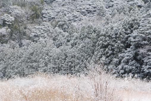 雪 積雪 白い雪 雪どけ 雪解け 雪溶け スノー 吹雪 雪国 雪景色 冬景色 snow 寒冷地 白 白色 真っ白 white 冬 厳冬 山 小さい山 大きい山 季節 枝 小枝 枯れ草 枯葉 植物 ススキ すすき 芒 winter 真冬 自然 森 林 森林 木 tree ツリー フォレスト 降雪 積もる 風景 静か 静寂