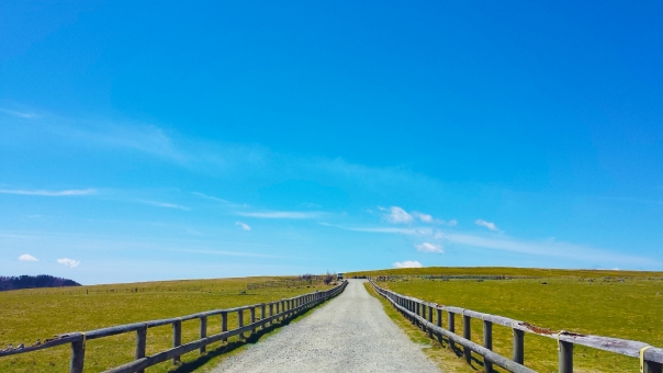 晴れた牧場の写真
