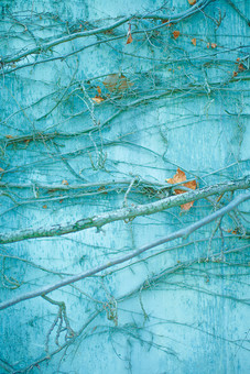 建物 建築 建築物 壁 塀 コンクリート 剥げる 褪せる 傷 古い 模様 這う 巻きつく 植物 自然 蔓 葉 葉っぱ 枝 枯れる 成長 育つ 伸びる 模様 無人 アップ 加工 景観