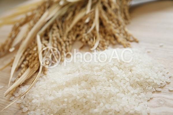 稲と白米2の写真