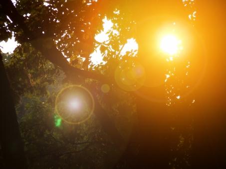 夕陽 夕焼け 夕暮れ 夕焼 夕暮 夕方 日射し 逆光 森 森林 シルエット シャドウ 影 オレンジ オレンジ色 橙 橙色 林 木 太陽 sun sunset 光 フラッシュ 癒し ヒーリング スピリチュアル 太陽光 自然 forest